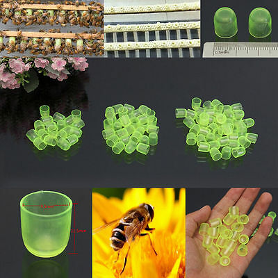100PCS Beekeeping Cell Cups Royal Jelly Cups Set Queen Bee Rearing Equipment