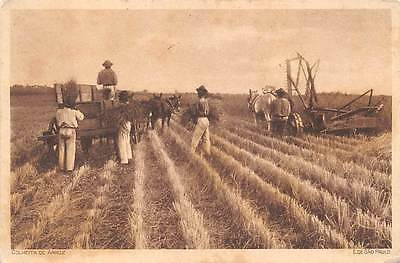 BRAZIL ~ WORKERS HARVESTING RICE, MACHINERY, HORSES ~ used 1924