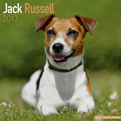 "Jack Russell Terrier 2017 Wall Calendar by Lang/Avonside (12"" x 24"" opened)"