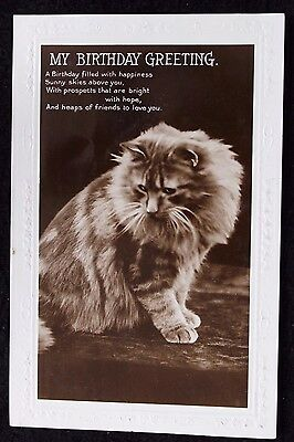 Nice Vintage Real Photo Cat Birthday Greetings Postcard with Embossed Border
