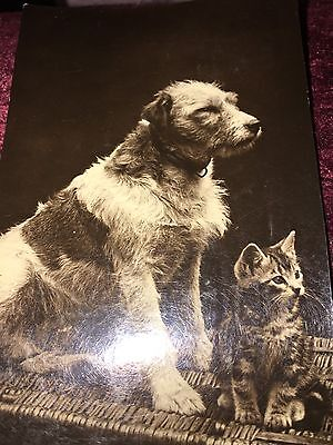 Dog & Kitten Postcard Posted 1926