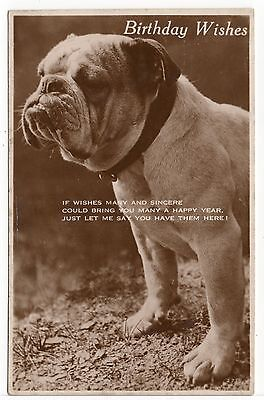 Bulldog Old Dog Birthday Greetings Photo Postcard