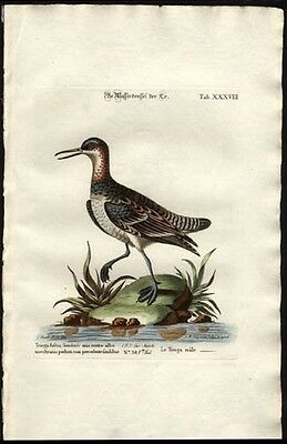 1759 Seligmann Engraved Had-Colored Print Common Redshank George Edwards