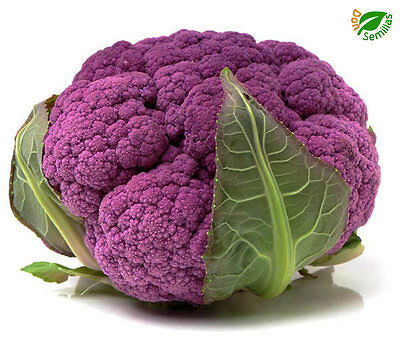 Coliflor Violeta ( 400 semillas ) purple * cauliflower * seeds