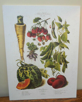 Vintage French print Vilmorin Andrieux Les Plantes Potageres vegetables, kitchen