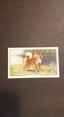Finnish Spitz 1938 tobacco dog breed trading card. Suomen Pystykorva AKC
