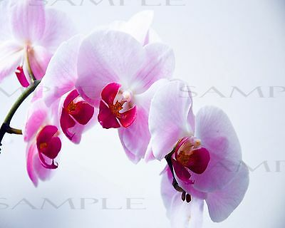"""Digital Photo Picture 8""""x10"""" Beauty Spring Pink Flower"""