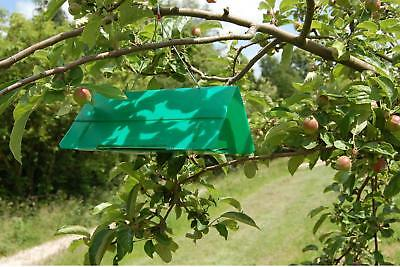 Agralan Plum Fruit Moth Trap - Refills Also Available
