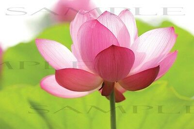 DIGITAL PICTURE PHOTO SPRING WALLPAPER FLOWER 12x18 inches 300 dpi