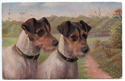 Jack Russell Wire Haired Terrier Dogs Head Study Old Dog Art Postcard