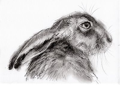Hare Picture - ORIGINAL A4 Wildlife Drawing Sketch Animal Art by Belinda Elliott