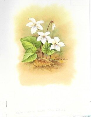 Production Artwork - Sweet White Violet