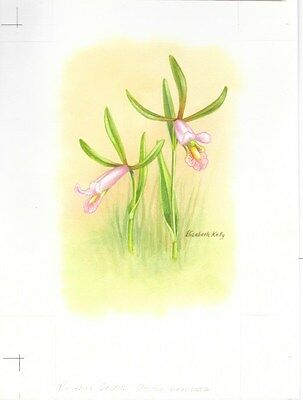Production Artwork - Rosebud Orchid