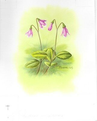 Production Artwork - Twinflower