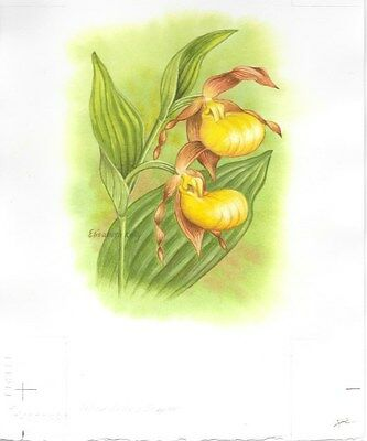 Production Artwork - Yellow Lady's Slipper