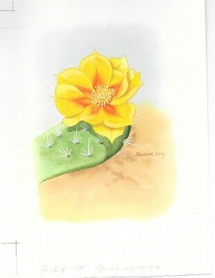 Production Artwork - Plains Prickly Pear