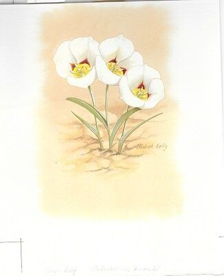 Production Artwork - Sego Lily