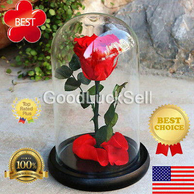 Beauty and the Beast Real Preserved Red Rose * Best Gifts for Lovers !