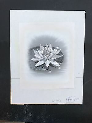 Production Artwork - Waterlily Flower