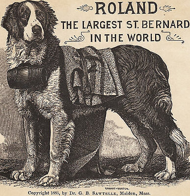 Authentic c 1885 Roland Largest St Bernard Sawtelle Malden MA Circus Dog Ad Card