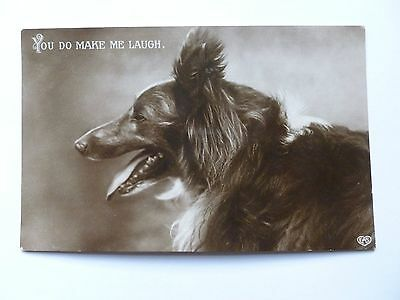 old postcard of a dog