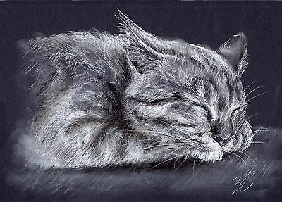 Cat Picture - ORIGINAL A4 Portrait Drawing Sketch Animal Art by Belinda Elliott