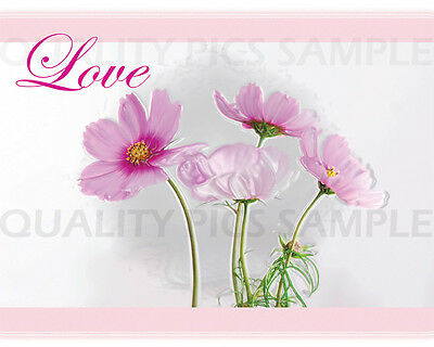 """Digital Photo Picture 8""""x10"""" Beauty Pink Love Spring"""
