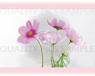 """Digital Photo Picture 8""""x10"""" Beauty Pink  Spring"""