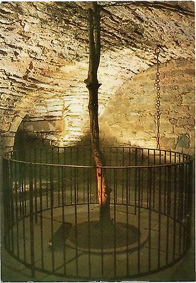 """Hawthorn Tree in Dungeon,Cawdor Castle(known from Shakespeare tragedy """"Macbeth"""")"""