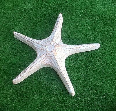 Large Starfish Mould For Plaster or Cement