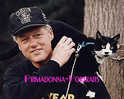 BILL CLINTON 8X10 Lab Photo 1990s with Cat, Socks, Candid Presidential Portrait