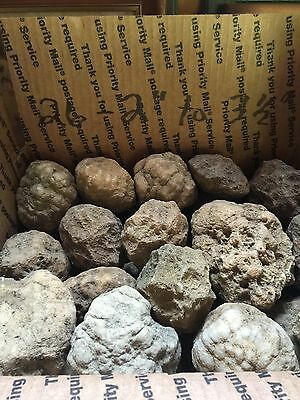 "Box Of Kentucky Geodes:26-2"" To 3 1/2"""