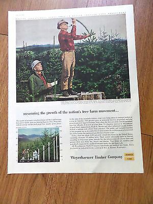 1956 Weyerhaeuser Timber Ad Clyde Sayers Martin Forestry Consultant