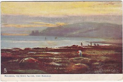 Artist Drawn, The Shell Island, Mochras, Nr HARLECH, Merionethshire - Oillette