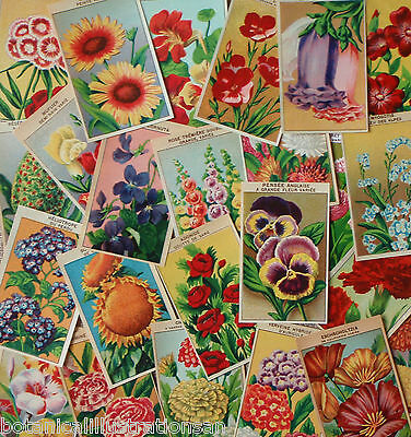 1920's Original Antique Lithographs 72 French Flower Seed Packet Labels