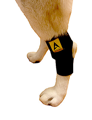 Canine Dog Pet Compression Wrap Injury rear legs hock brace support hips joints