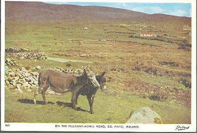 Mulranny to Achill Island Road, Co. Mayo, Ireland - donkeys - postcard c.1960s