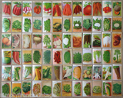 Old 1920's Seed Packet Labels 72 Original Lithograph Vegetable Prints FRENCH