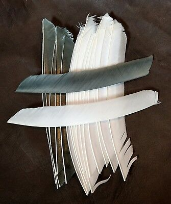 18 FULL LENGTH FEATHER FLETCHINGS grey and white for Longbow Arrows