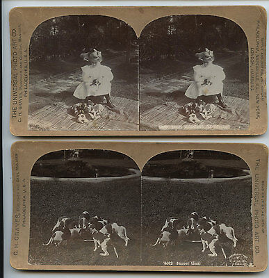 Girl w pointer puppy hunting dogs puppies eating Graves stereoview Old Antique