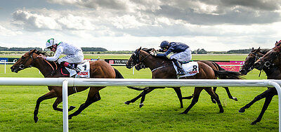 CUT PRICE Racing System -. The Price Is Right + So Easy +  Free Royal Ascot Tips