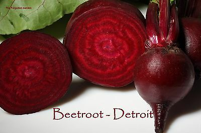 Beetroot Seed Detroit 100 Seeds Heirloom Vegetable Garden Root Red Nutritious