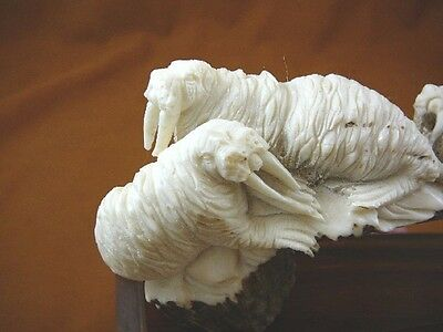 (WAL-7) white Walrus herd shed ANTLER figurine Bali detailed carving Odobenus