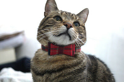 Red checkered pattern cat bow tie bowtie with leather or breakaway collar neckti