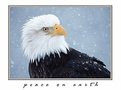 Eagle's Snow Christmas Cards