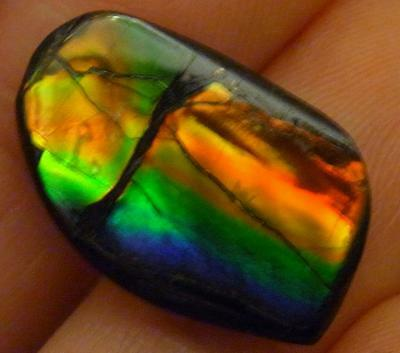 AMMOLITE  FOSSIL AMMONITE   20 x 12 mm     All the colors of the rainbow