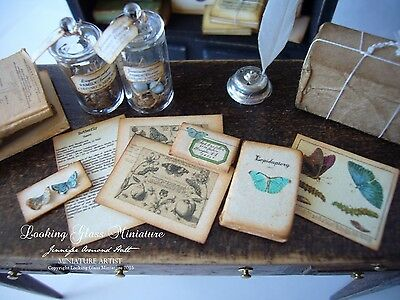 Miniature Butterfly/Lepidoptery Collection for Dollhouse 1/12 Scale
