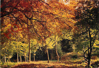 Postcard, Ashridge Woods, Near Aldbury, Autumn