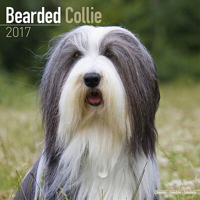 "Bearded Collie 2017 Wall Calendar by Avonside (12"" x 24"" when opened)"