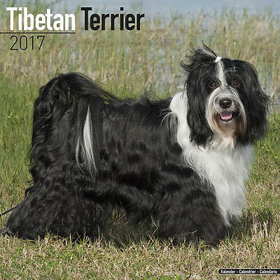 "Tibetan Terrier 2017 Wall Calendar by Avonside (12"" x 24"" when opened)"